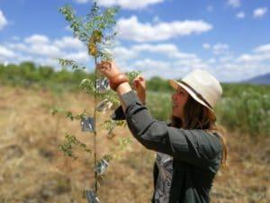 Pengar och utrotning av fattigdom växer på träd @RikaKvinnor.se