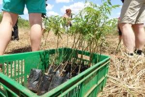 Trädplantor redo för plantering -Better Globe @RikaKvinnor.se